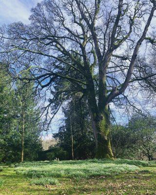 Snowdrops and sunshine ☀️🌱  #armathwaitehall #snowdrops #sunshine #tuesdaytreats