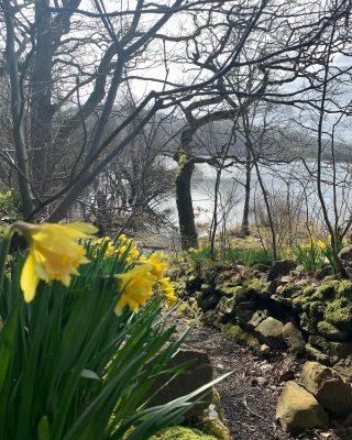 Spring has sprung 🌼