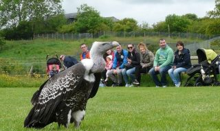 Happy International Vulture Awareness Day.  At Lake District Wildlife Park, our keepers are proud to support the International Vulture Programme with fundraising activity to help to preserve this incredible yet highly endangered species.  Find out more via the link in our bio! #armathwaitehall #internationalvultureawarenessday #conservation #vulture #birdsofprey #lakedistrictwildlifepark #lakedistrictuk