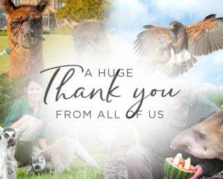 Following the phenomenal response to our Crowdfund campaign, we would like to thank everyone that donated to Lake District Wildlife Park during this challenging time.   Your support makes a difference to the lives of our wonderful animals and the dedicated keepers that work so hard to protect and conserve these species.   We look forward to brighter days to come and cannot wait to welcome you back to our park soon.  #aramathwaitehall #lakefistrictwildlifepark #lakedistrict #thankyou