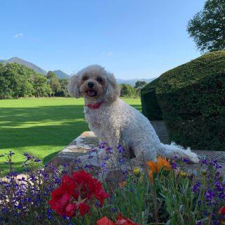 Happy International Dog Day 🐾   Thank you Lola for modelling for us so well!   #internationaldogday #armathwaitehall #dogs #dog #dogfriendlylakes #dogfriendly #dogfriendlyholidays #dogfriendlyhotel #lakedistrict