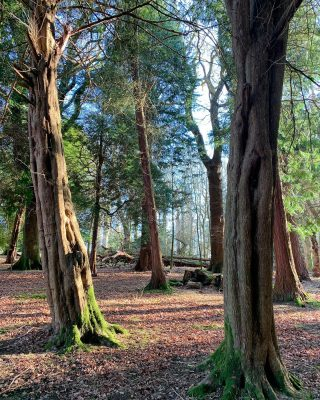 Happy International Day of Forests 🌳   The Armathwaite Hall estate has over 400 acres of park, gardens and diverse woodlands from deciduous oak, sycamore, Lime, Beech and birch, to coniferous areas of yew, sequoia, pine and larch.   To make the most of these beautiful areas we have a 'Forest Bathing' experience which you can enjoy as a day or stay over or buy as a gift card.  Take a look at our offers via the link to the website in our bio.  #internationaldayoftheforest #forest #forests #forestbathing #forestbathingtherapy #armathwaitehall #lakedistrict #lakedistrictuk #forestbathinginthelakedistrict #internationaldayoftheforest #internationaldayofforests